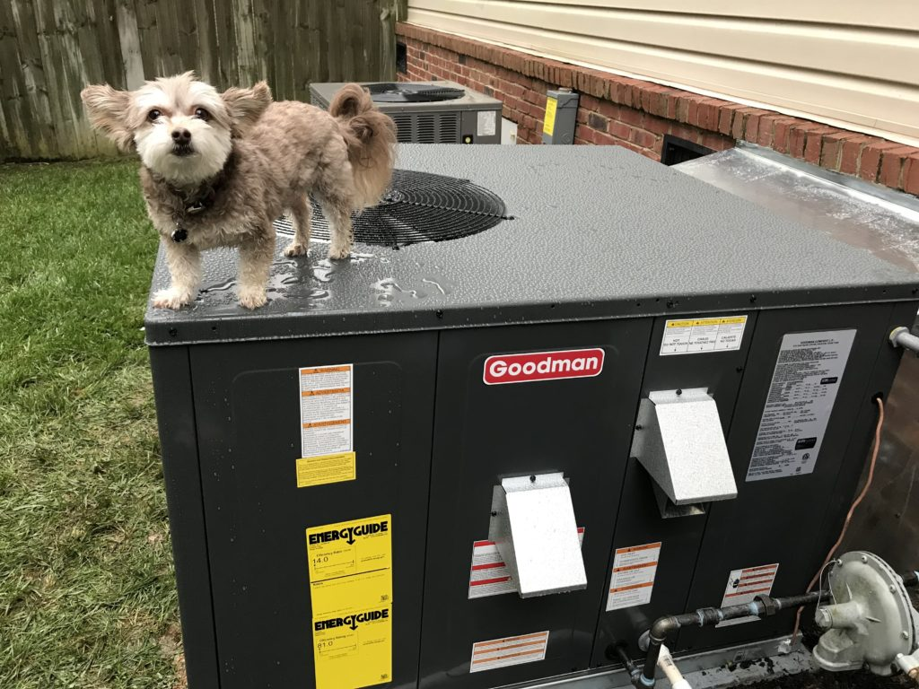 Our New Goodman HVAC and Gizmo, the Tech Dog
